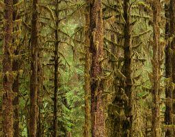 Baumstamm Wald Moos