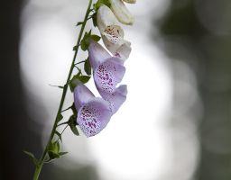 Blüte Blume Lichtreflexe