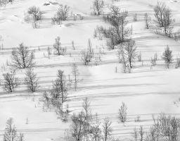 Winter Baum Schnee
