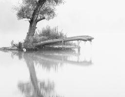 Baum Nebel Spiegelung Wasser