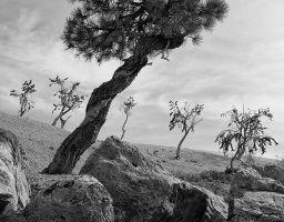 Baum Stein