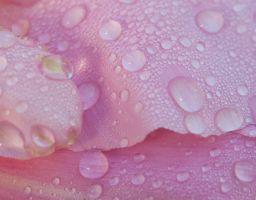 Blume Pflanze Blüte Tau Wasser Tropfen