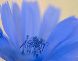 Blume Blüte