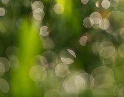 Tau Gras Tropfen Pflanze