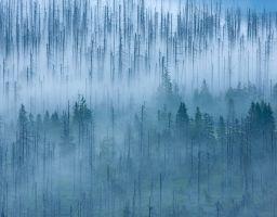 Baum Wald Totholz