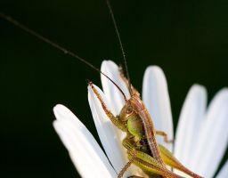 Tier Insekt Margerite