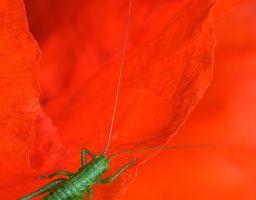Tier Insekt Büte