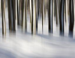 Baum Winter Schnee