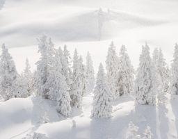 Schnee Wald Nadelbaum