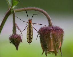 Tier Insekt