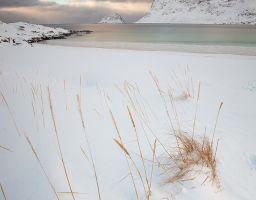 Gras Meer Strand Winter