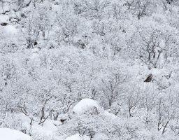 Wald Winter Schnee Bäume